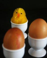 Spodki do jajek